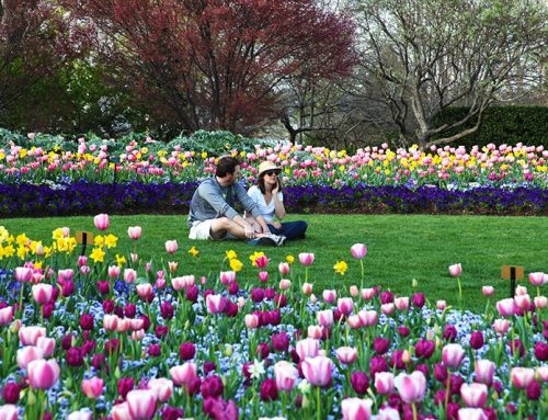 The Dallas Arboretum Presents Dallas Blooms: Life's A Picnic February 23 to April 7