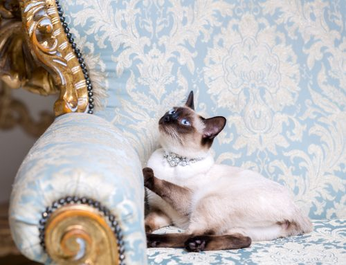 Ask Mrs. McVeigh – Party Guests and Pet Etiquette